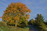 Road to Braddninch
