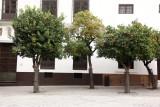 Iconic, Seville