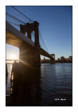 Under Brooklyn Bridge - NewYork - 7232
