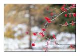 La Vallée de la Gordolasque dans la neige