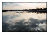 Marais de Pont de Gau - 0059