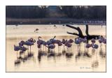 Fin du jour sur l'étang des flamants - 0203