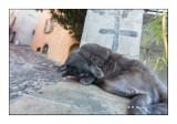 Biot - le chat rigolo - 3984