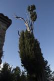 Alanya December 2013 3131.jpg