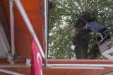 Urfa Cat in tree september 2014 2979.jpg