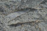 Cappadocia fox country Urgup september 2014 1778.jpg