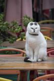 Antalya Cats feb 2015 6456.jpg