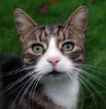 My Cat Dillian