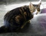 My big Cat Dillian