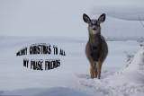 Winter in Alberta.