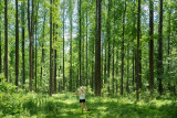 Majestic woodlands of Pennsylvania