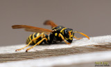 Insects - small scary stuff :-)