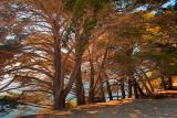 Cliff-edge tree line