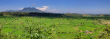 East Bali Rice Terraces