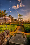 Morning in the Rice Fields