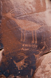 Big Horn Sheep Petroglyphs
