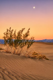 Dunes by Evening Light #2