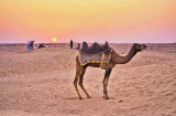 Samm Dunes, Rajasthan, India