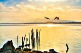 Shore Silhouettes w/Pelicans
