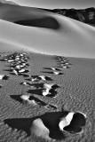 Mojave Tracks