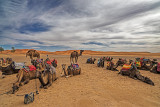 Camels on the Sahara