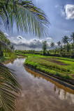 Irrigation Canal for Rice Fields