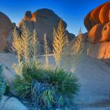 High Desert Evening