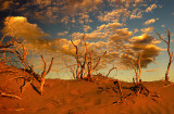 Dune Morning