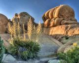 Desert Blooms at Sunset