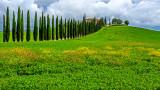 Classic Cypress-lined Tuscan Villa Driveway