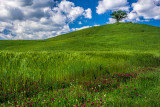 Green Hills of May