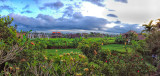 Boutiique Hotels Amid Rice Fields
