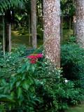 Wild Poinsettia, Dunn's River Falls