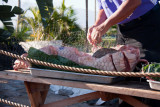 Prepping the Pig For The Evening Luau