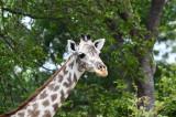 Selous Game Reserve 2015