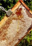 36 huckleberry honey.jpg