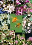 41 bees and flowers.jpg