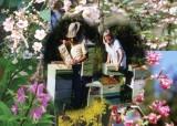 42 beekeepers and flowers.jpg