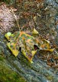 28 fall leaf camouflage