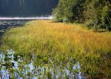 14 lake grass