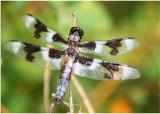 Dragonfly and ladybug