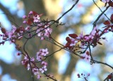 31 trunk and plum blossom buds