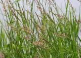 26 summer grass