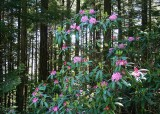 19 wild olympic rhodies