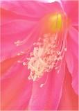 07 orchid cactus