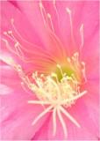 20 orchid cactus 2