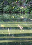 22 shadows on shadow lake