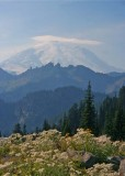 81 pearly and mt rainier