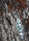 24 colorful pebbles at rialto beach