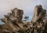 23 tree bones, trees